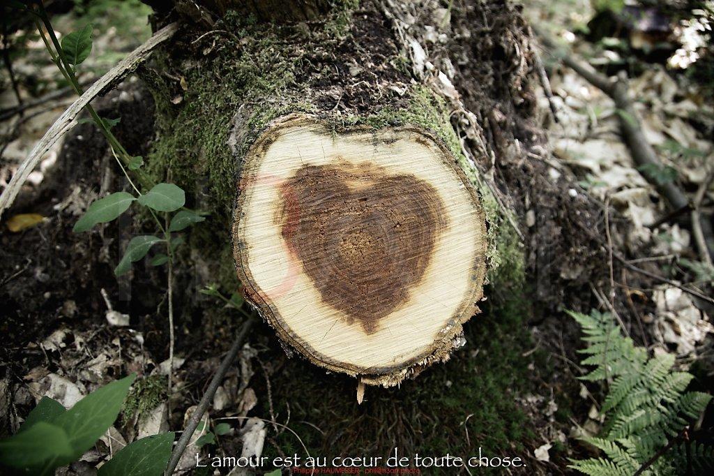 L'amour est au cœur de toute chose.